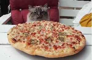 Hungrig katt spanar in middagen - Pizza