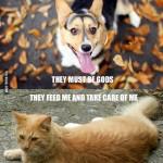Hund vs Katt