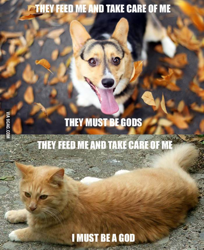 Skillnaden-mellan-hund-och-katt1