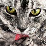 Jämföra kattförsäkring – Att tänka på