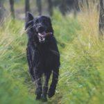 Hemleverans av färskfoder till hundar