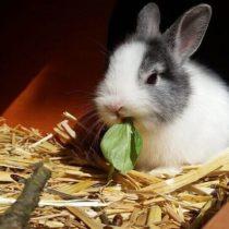 Söt kanin knapprar på ett blad