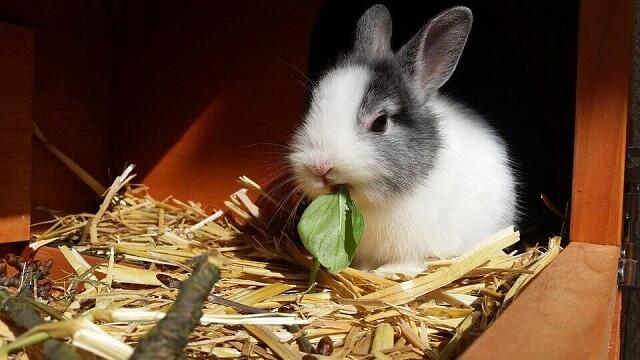 Söt kanin knaprar på ett blad