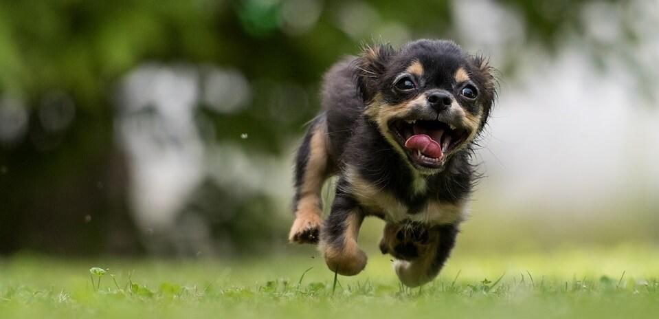 En springande glad hundvalp