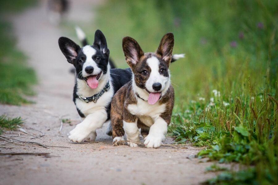 2 söta små hundvalpar